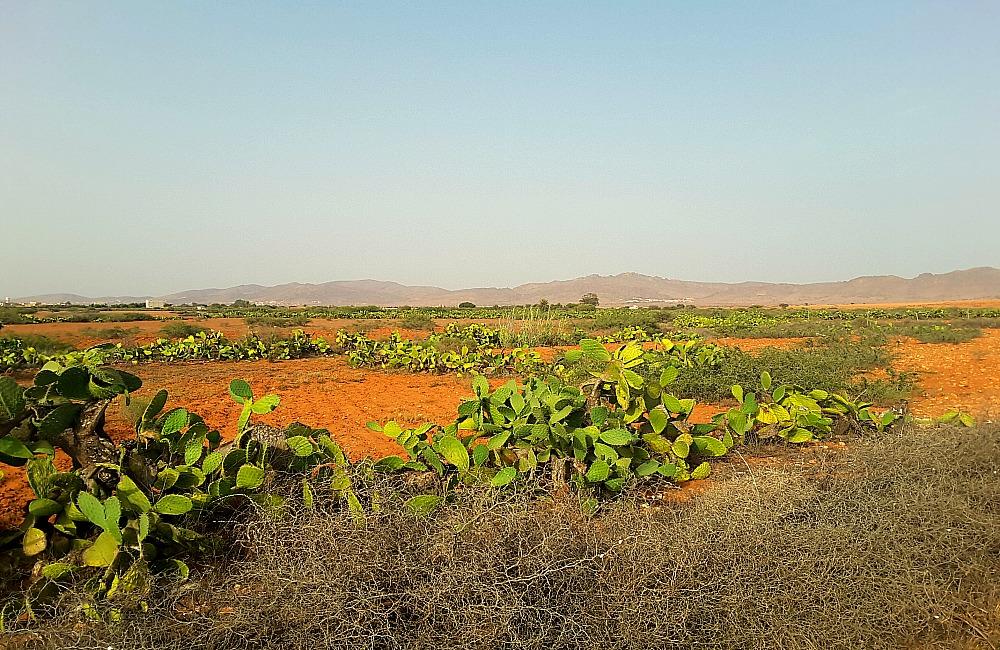 południe Maroka - pola kaktusowe